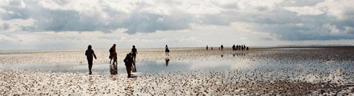 Führung im Wattenmeer
