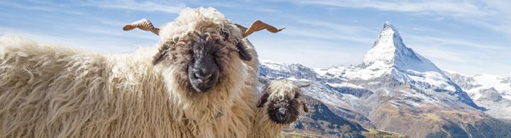 Zermatt – 360° Bergsicht