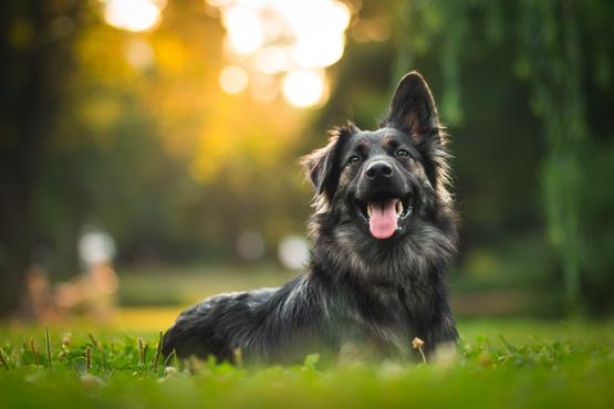 Les chiens sont-ils autorisés<br>à l'Europa-Park ?