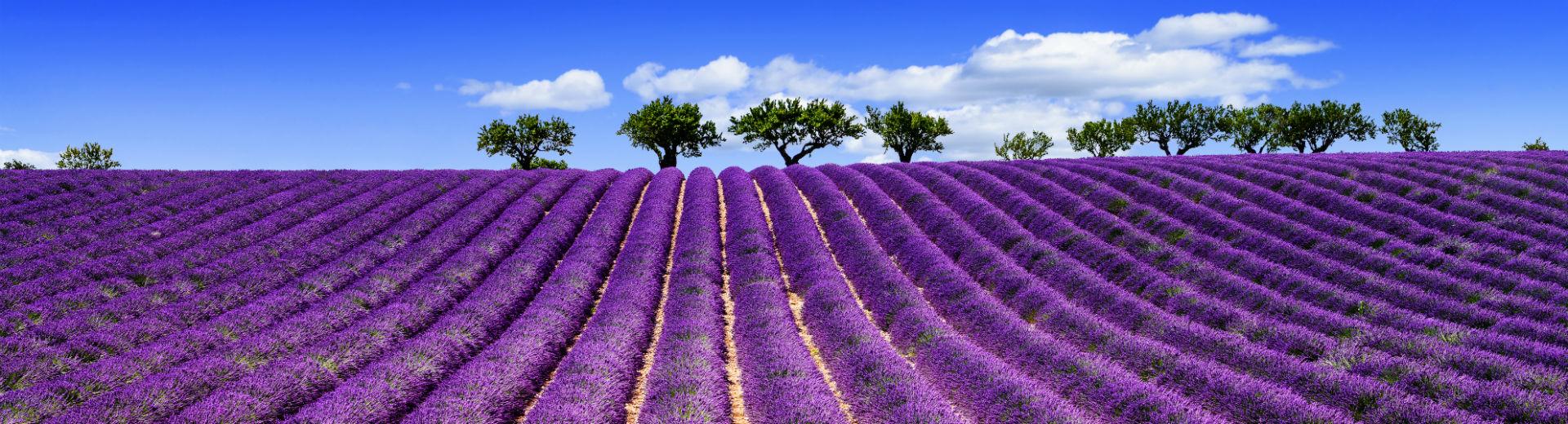 Kurztrip in die Provence – In das Land des Lavendels