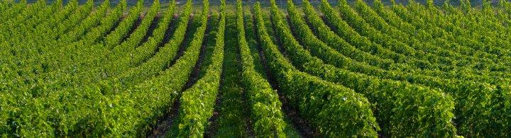 Kurztrip nach Bordeaux und Saint-Emilion – Wein und Welterbe