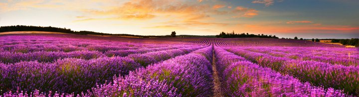 Provence – Rundreise mit dem Auto
