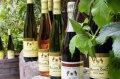 Colmar - Elsässer Wein © Domaine Baur