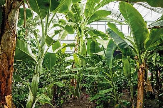 Eintritt Ausstellung Tropenhaus Frutigen